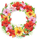 Wreath of tropical flower hibiscus and flowers Stock Images
