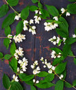 A wreath of white Jasmine flowers with green leaves Royalty Free Stock Photo
