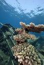 Wreck freighter Kormoran - sank in 1984 Tiran Royalty Free Stock Photo