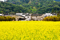 Wuyuan canola flower industry agriculture natural Stock Photos
