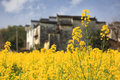 Wuyuan scenery and canola flowers Royalty Free Stock Photo
