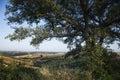 wzgórza oak tree przechyłu Toskanii Fotografia Royalty Free