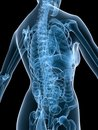 X-ray female back Royalty Free Stock Images