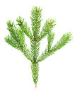Xmas fir tree branch isolated on white background Stock Photography