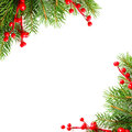 Xmas green tree and red holly berry Royalty Free Stock Photos