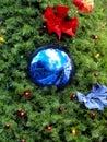 Xmas pine close up Stock Photo