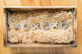 Xoxo hugs and kisses symbols in a wooden gift box filled with natural raffia Stock Image