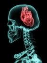 Xray of skull with heart. Royalty Free Stock Photo