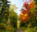 Xxl beautiful forest landscape fall season dirt road Royalty Free Stock Images
