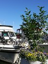 Yacht club, luxury life, sailing Royalty Free Stock Photo