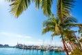 Yacht Harbor In Miami Florida
