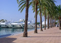 Yachts and palm trees Royalty Free Stock Photo