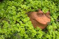 Yard art frog vine creeping jenny clay displaying a named Stock Photography