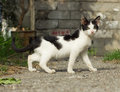 Yard kitten black and white outdoor Royalty Free Stock Photo