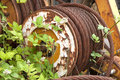 Yarder cable wire rope on a geared reel of a logging being overtaken by blackberry vines Royalty Free Stock Image