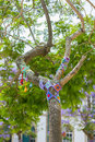 Yarn bombing in trees european park a tree dressed with knitted colorful wool Royalty Free Stock Photos