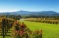 Royalty Free Stock Images Yarra Valley