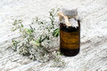 Yarrow (achillea millefolium) and pharmaceutical bottle Royalty Free Stock Photo