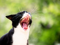 Yawning cat and green nature in background focus is on the tongue Royalty Free Stock Images