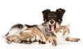 Yawning dog embracing cat. isolated on white background Royalty Free Stock Photo
