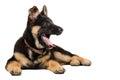 Yawning German shepherd puppy Royalty Free Stock Photo