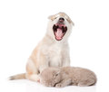 Yawning puppy and sleeping cat. isolated on white background Royalty Free Stock Photo