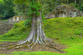 Yaxchilan Royalty Free Stock Photo