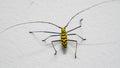 Yello bug on white wallpeper Stock Image
