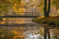 Yellow autumn colors on trees in the park Royalty Free Stock Photo