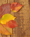 Yellow autumn leaves on old wood background Royalty Free Stock Photo