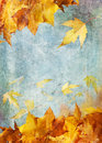 Yellow autumn leaves painting Stock Photos