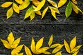 Yellow autumn leaves pattern on grey wooden background top view copy space Royalty Free Stock Photo