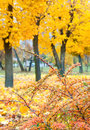 Yellow autumn park Royalty Free Stock Photography