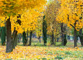 Yellow autumn park Royalty Free Stock Photos