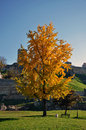 Yellow autumn tree in the city park Royalty Free Stock Photo