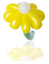 Yellow balloon flower on white background the Stock Image