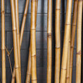 Yellow bamboo fence background on the black wood Royalty Free Stock Photography