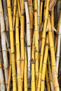 Yellow bamboo plant texture background Stock Images