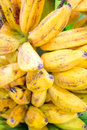 Yellow banana bunch in garden Royalty Free Stock Photos