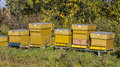 Yellow bee hives Royalty Free Stock Photo