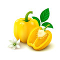 Yellow bell pepper bulgarian pepper on white background whole with half flower and leaves vector illustration Royalty Free Stock Photo