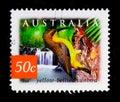 Yellow-bellied Sunbird Nectarinia jugularis, Nature of Australia - Rainforests serie, circa 2003 Royalty Free Stock Photo