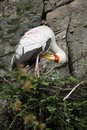 Yellow-billed stork in the nest Royalty Free Stock Photos
