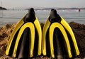 Yellow and black colored flipper over the sands sea Royalty Free Stock Image
