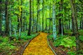 Yellow brick road through forest Royalty Free Stock Photo