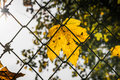 Yellow Bright Leaf Autumn Fall Fence Hanging Squares Chains Text Royalty Free Stock Photo