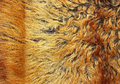 Yellow and brown fur texture Royalty Free Stock Photo