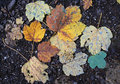 Yellow and brown leaves of autumn Royalty Free Stock Photo