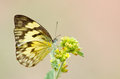 Yellow butterfly and flower a on a with soft pastel background Stock Photography