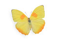 Yellow butterfly isolated on white background Stock Photos